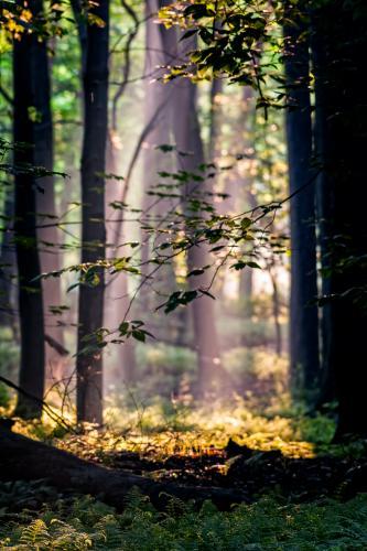 Reinstein Woods