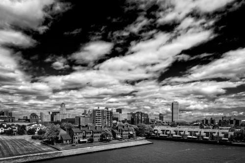 Buffalo in Black & White