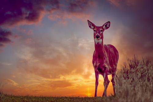 0055-WNY Wildlife