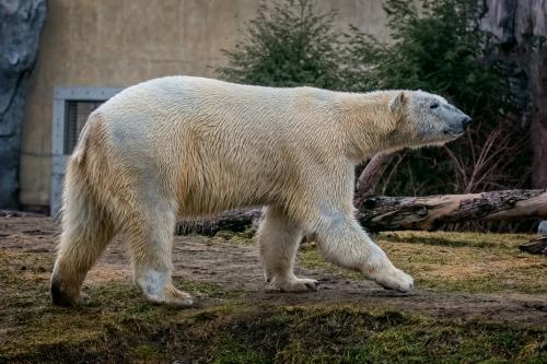 0058-Buffalo Zoo