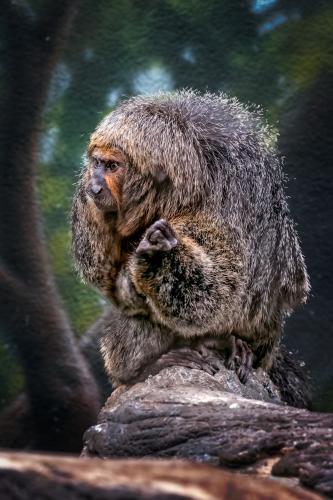 0066-Buffalo Zoo