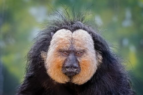 0069-Buffalo Zoo