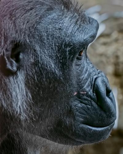 0078-Buffalo Zoo