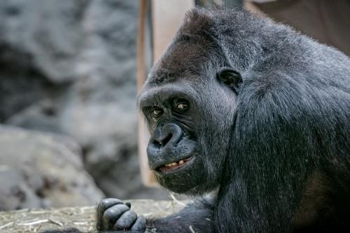 0082-Buffalo Zoo