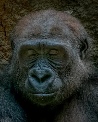 0094-Buffalo Zoo