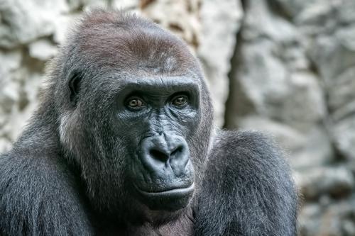 0098-Buffalo Zoo