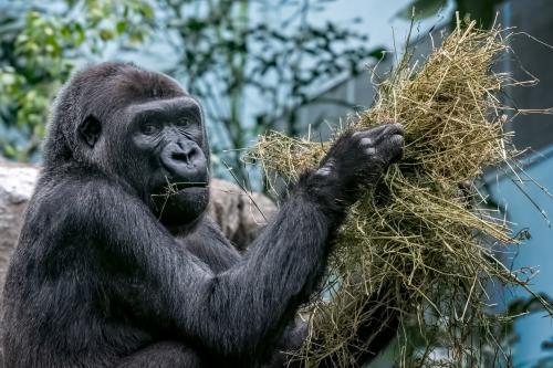 0099-Buffalo Zoo