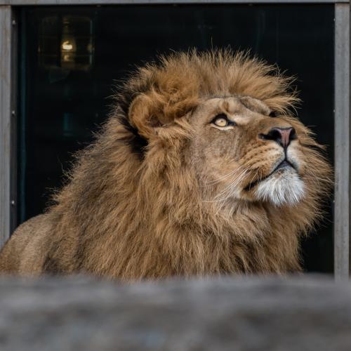 0101-Buffalo Zoo