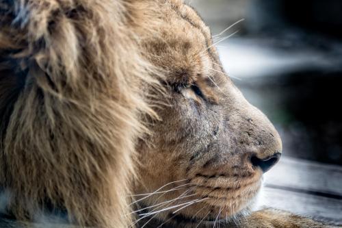 0106-Buffalo Zoo