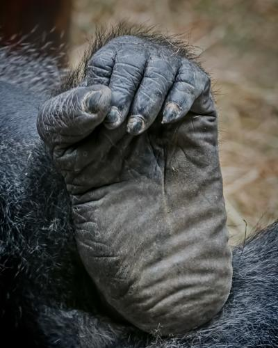 0110-Buffalo Zoo