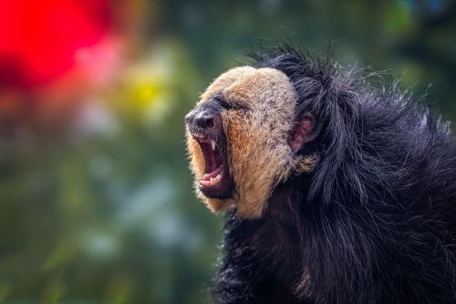 0116-Buffalo Zoo