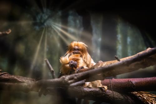 0118-Buffalo Zoo